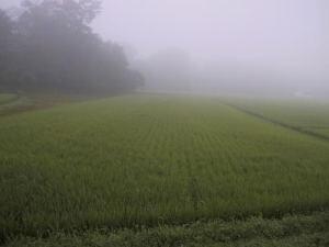 駆除 農薬 カメムシ